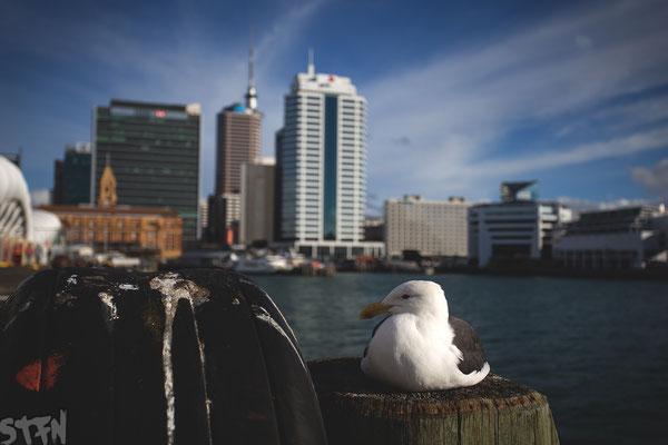 Auckland, Queens Wharf