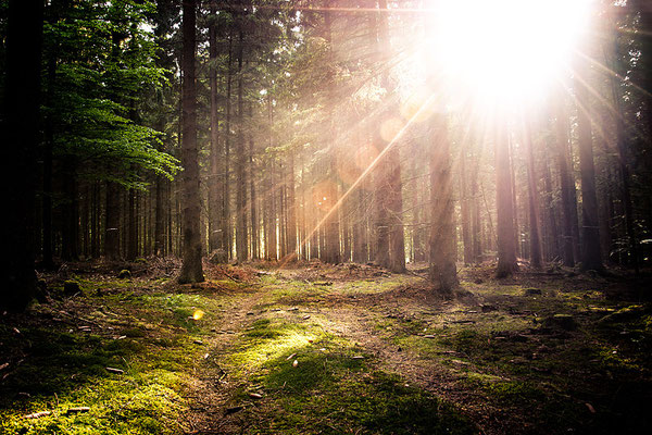 Bayerischer Wald Straubing