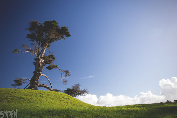 Auckland, One Tree Hill