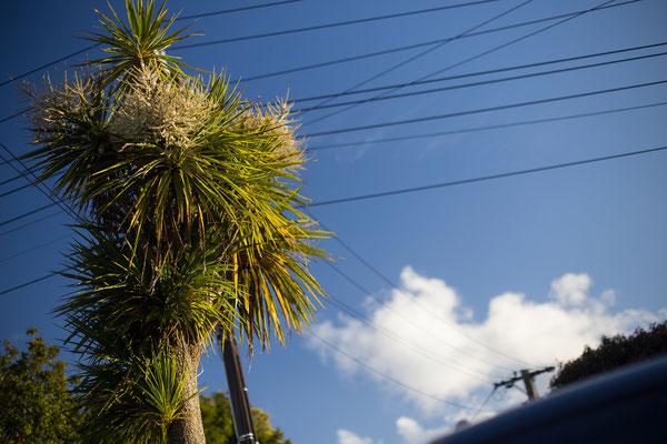 Auckland, Sandringham