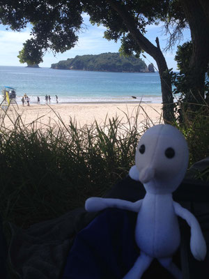 "cute travelmate ""Gnome"" introducing Hahei Beach"