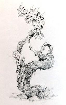 Alter Rebstock, Zeichenstift