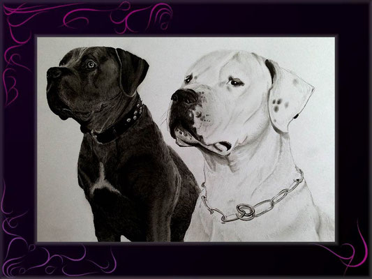 hundepaar als kunstzeichnung online bestellen - kunst meiner seele