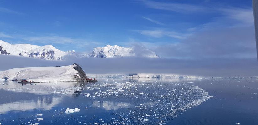 Nebelschleicher in der Antarktis