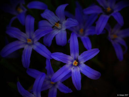 Blumenzauber 6
