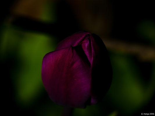Blumenzauber 43