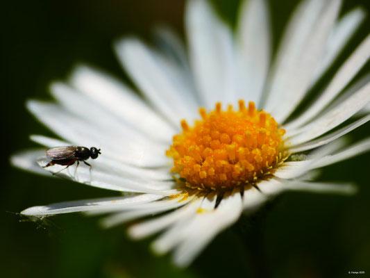 Blumenzauber 54