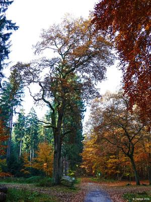 Herbstwald 50