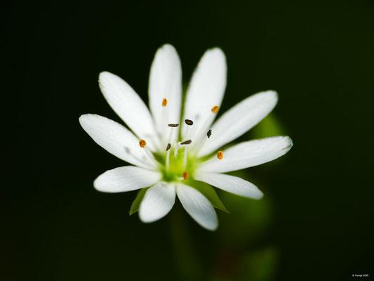 Blumenzauber 48