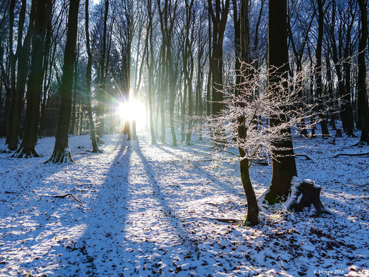Winterland 9