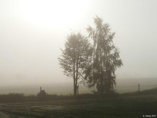 Nebelstimmung in Sieversen