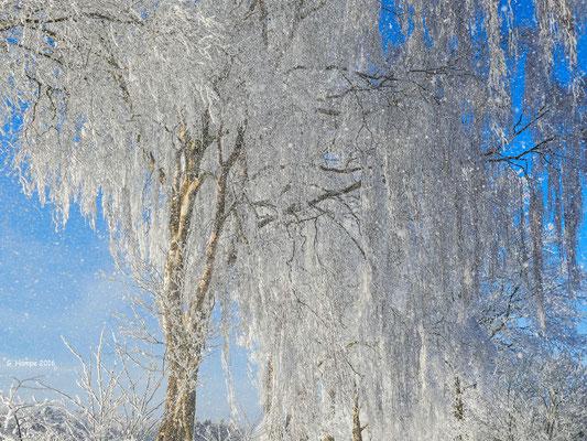 Winterland 39