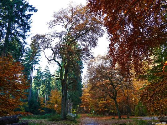 Herbstwald 49
