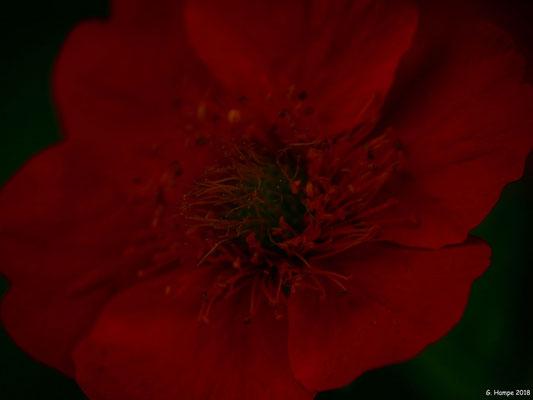 Blumenzauber 66