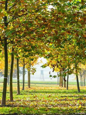 Herbstwald 32