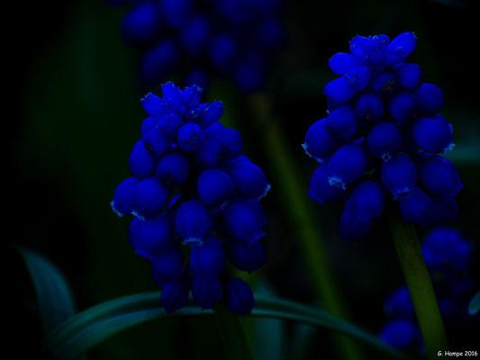Blumenzauber 37