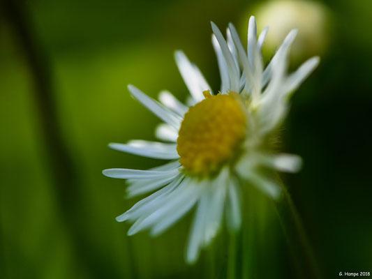 Blumenzauber 82