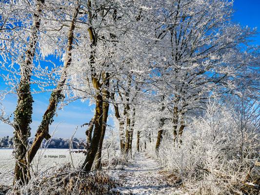 Winterland 27