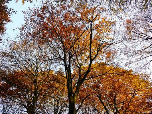 Herbstwald 21