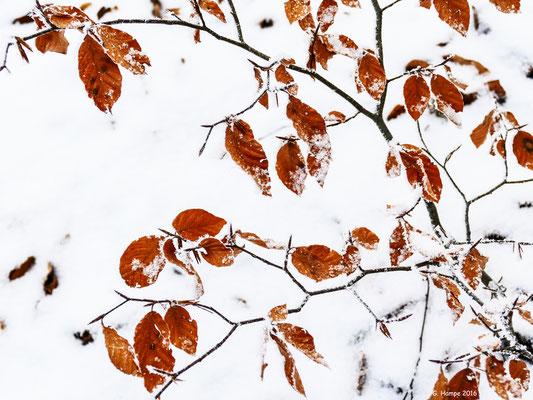 Winterblätter 1