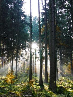 Herbstwald 37