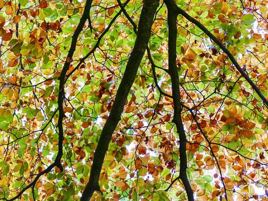 Herbstwald 35