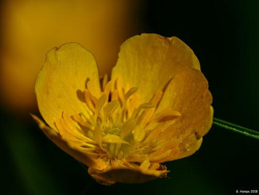 Blumenzauber 79