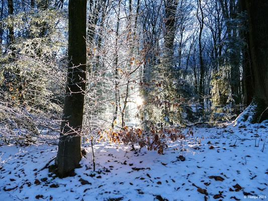 Winterland 5