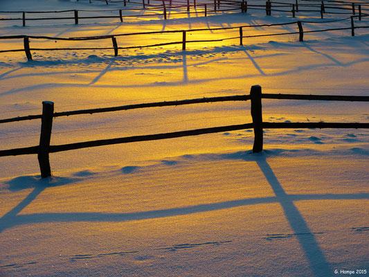 Winterzauber auf der Pferdekoppel