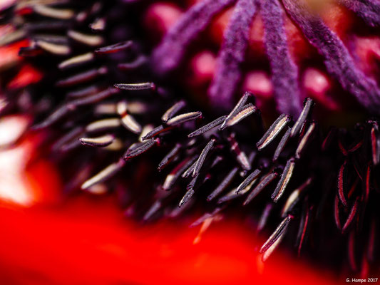 Blumenzauber 11