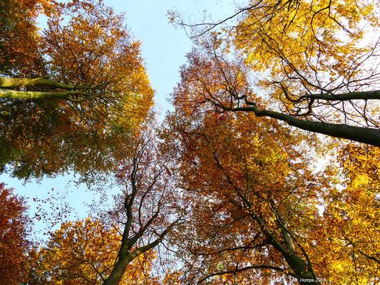 Herbstwald 45