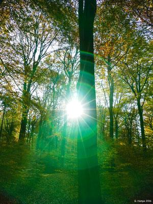 Herbstwald 26