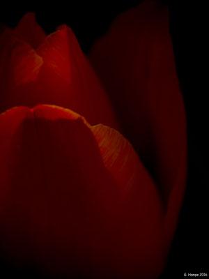 Blumenzauber 29