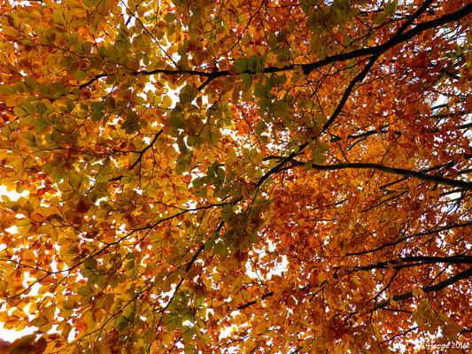 Herbst auf dem Vahrendorfer Friedhof