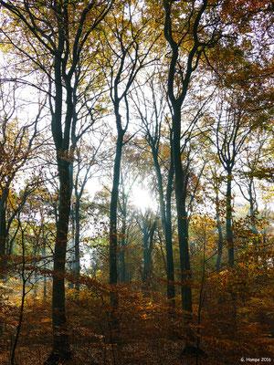 Herbstwald 20