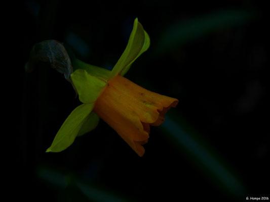 Blumenzauber 39