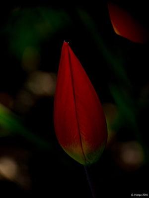 Blumenzauber 28
