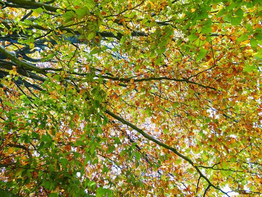 Herbstwald 34