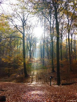 Herbstwald 16