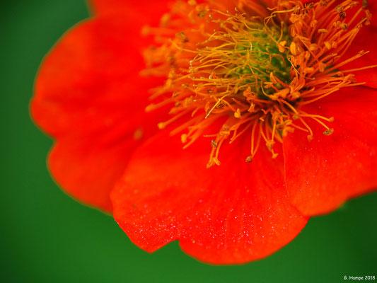 Blumenzauber 68
