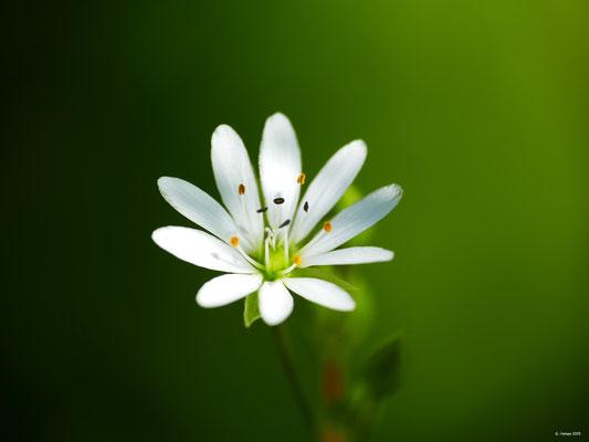 Blumenzauber 47