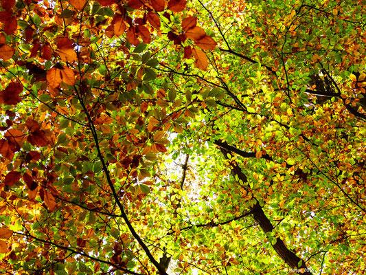 Herbstwald 43