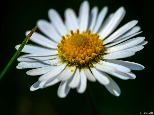 Blumenzauber 81