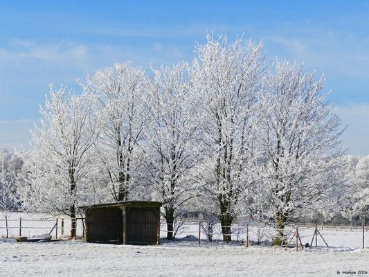 Winterland 16