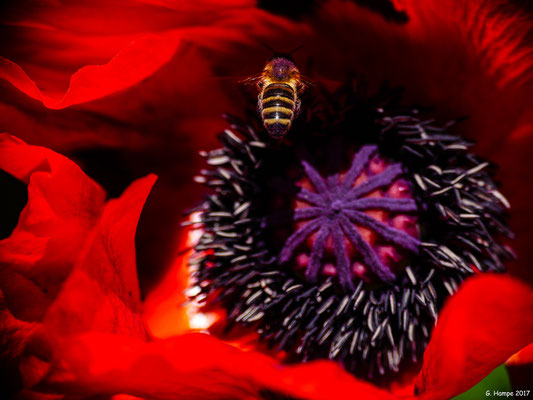 Blumenzauber 10