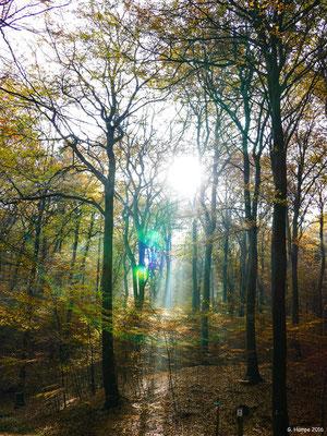 Herbstwald 17