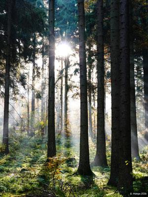 Herbstwald 38