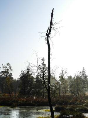 Tister Moor 26