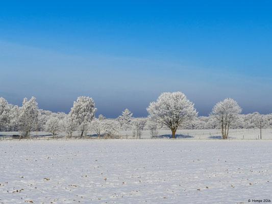 Winterland 45