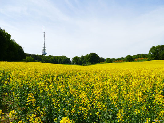 Langenrehmer Fernsehturm im Sommer
